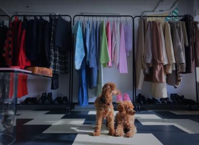 Kläder hänger på en klädställning, framför sitter två hundar