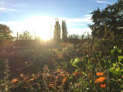 trädgård, blommor, buskar, sol