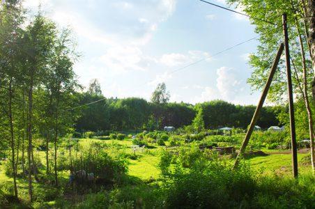 kolonilotter och odlingsgårdar. Skog i bakgrunden.