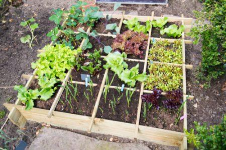 En pallkrage indelad fack med olika växter i de olika facken.